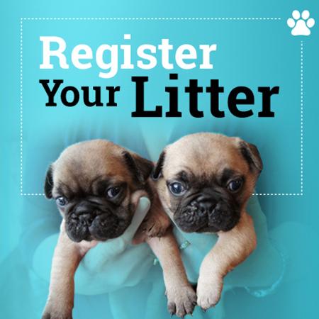 Litter Registration Application