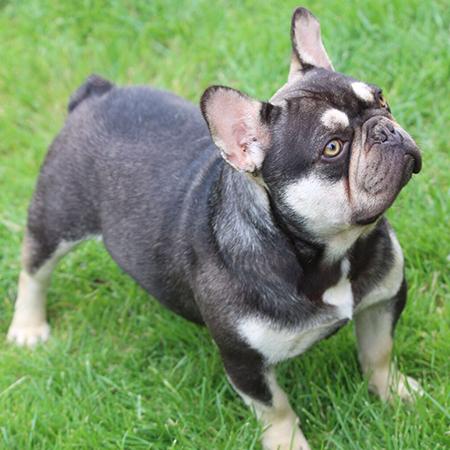 Register my dog as a Pedigree